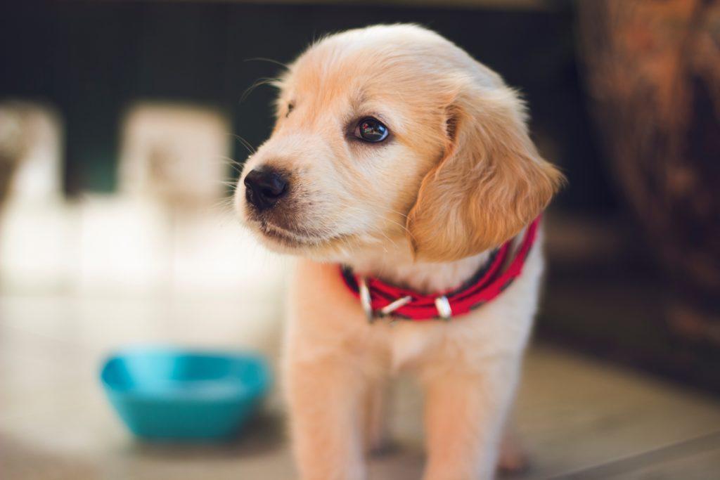 日本でも犬用CBDオイルが購入できる
