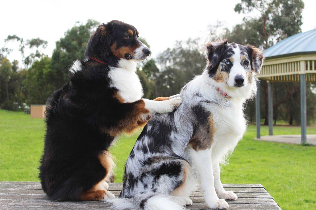 家族である犬のための選択肢